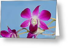 Orchids With Blue Sky Greeting Card