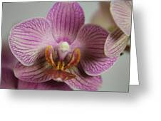 Orchids1 Greeting Card