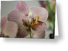 Orchids5 Greeting Card