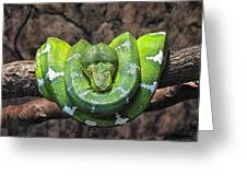 Orderly Snake Greeting Card