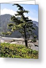 Oregon - Heceta  Greeting Card