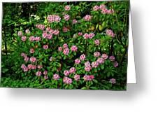 Oregon Azaleas Greeting Card