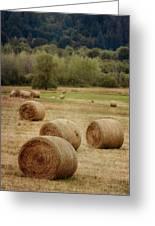 Oregon Hay Bales Greeting Card by Carol Leigh