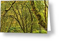 Oregon Rainforest Greeting Card
