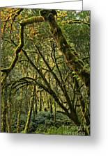 Oregon Rainforest Green Greeting Card