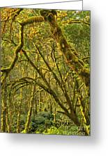 Oregon Rainforest Portrait Greeting Card by Adam Jewell