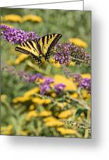 Oregon Swallowtail In The Garden  Greeting Card
