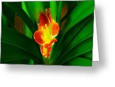 Organic Glowing Greeting Card