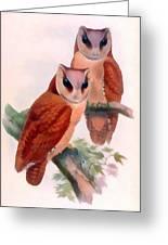 Oriental Bay Owl Greeting Card