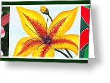 Oriental Daylily Trio Greeting Card