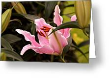Oriental Lily Beauty Greeting Card