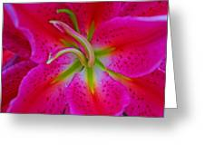 Oriental Lily Stamen Greeting Card