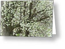 Oriental Pear Tree Greeting Card