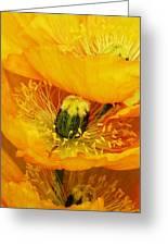Oriental Poppies  Greeting Card