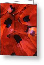 Oriental Poppy IIi Greeting Card