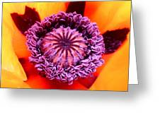 Oriental Poppy Greeting Card
