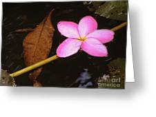 Oriental Touch  Greeting Card