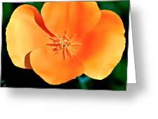 Original Digital Painting Of The California Poppy Greeting Card