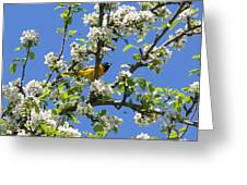 Oriole In A Pear Tree Greeting Card