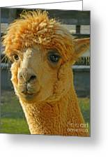 Orion The Alpaca Greeting Card
