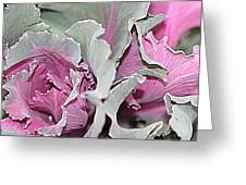Ornamental Cabbage 1 Greeting Card