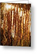 Ornamental Golden Grass Greeting Card