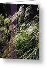 Ornamental Grass Greeting Card