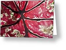 Ornamental Leaf Greeting Card