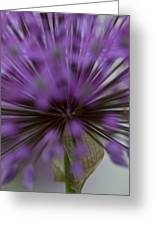 Ornamental Onion Greeting Card