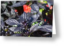 Ornamental Peppers Greeting Card