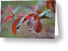 Ornamental Plum Tree Leaves With Raindrops Greeting Card