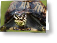 Box Turtle Close-up Greeting Card
