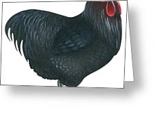 Orpington Rooster Greeting Card
