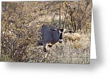 Oryx Long Horned Antelope Greeting Card