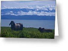 Osa Cattle Greeting Card
