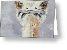 Oscar - An Ostrich Greeting Card