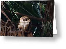 Oscar The Barn Owl Greeting Card