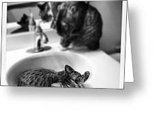 Oskar And Klaus At The Sink Greeting Card by Mick Szydlowski