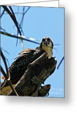Osprey 1 Greeting Card