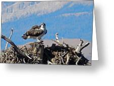Osprey And Catch Greeting Card