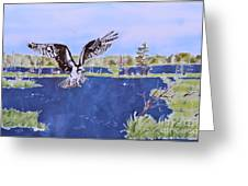 Osprey At Tuttle Marsh Greeting Card