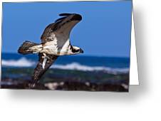 Osprey Bringing Home The Bacon Greeting Card