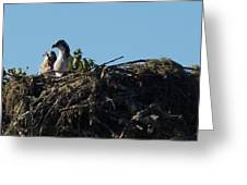 Osprey Chicks In Nest Greeting Card