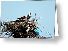 Osprey Couple Greeting Card