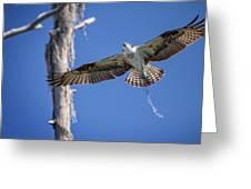 Osprey Fly By Greeting Card