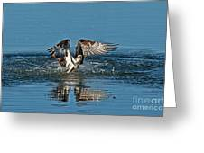 Osprey Getting Out Of The Water Greeting Card