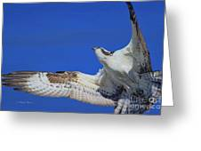 Osprey Grace And Beauty Greeting Card
