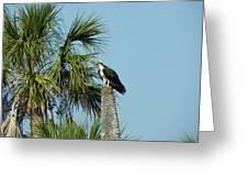 Osprey Heaven Greeting Card