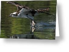 Osprey Hunter Greeting Card