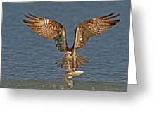 Osprey Morning Catch Greeting Card